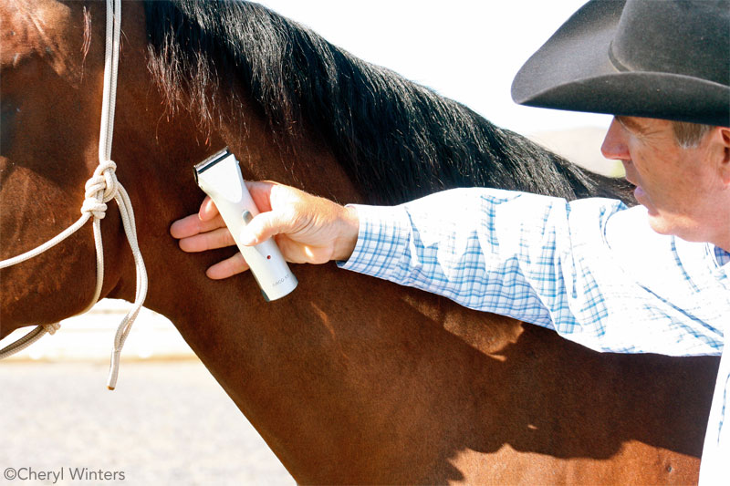 Horse Times Egypt: Equestrian Magazine :News :Conquer Grooming Fears