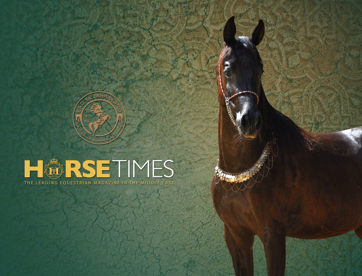 Horse Times Egypt: Equestrian Magazine :News :Mesmerizing Beauty of Arabian Horses at El Zahraa Stud