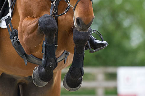 Horse Times Egypt: Equestrian Magazine :News :10 tips to banish competition riding nerves
