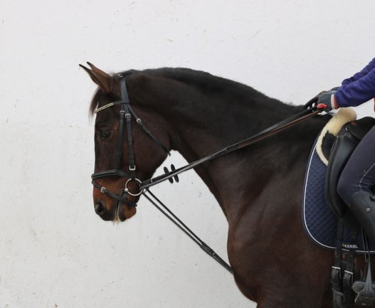 Horse Times Egypt: Equestrian Magazine :News :The Swiss Equestrian Federation bans the use of draw reins at horse shows in 2016
