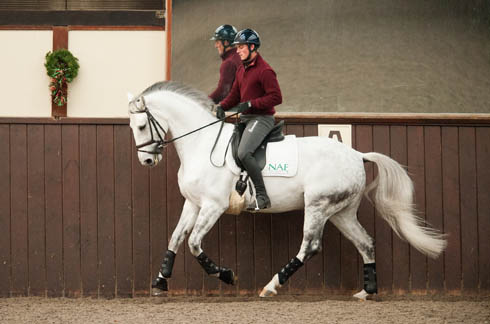 Horse Times Egypt: Equestrian Magazine :News :Michael Eilberg's 10 training tips: hot horses