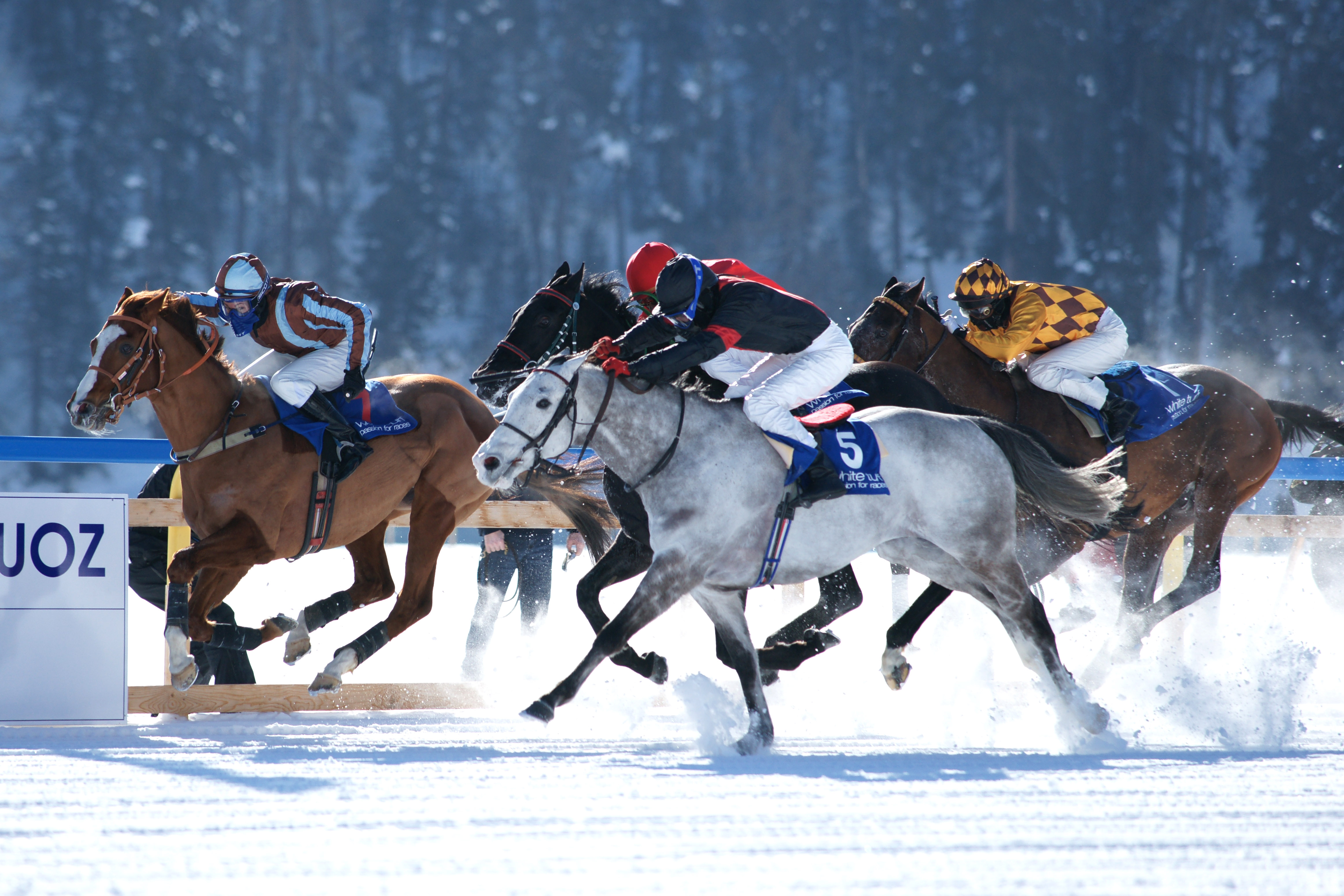 Horse Times Egypt: Equestrian Magazine :News :RISK FACTORS FOR INJURY IN SWISS HORSE RACING