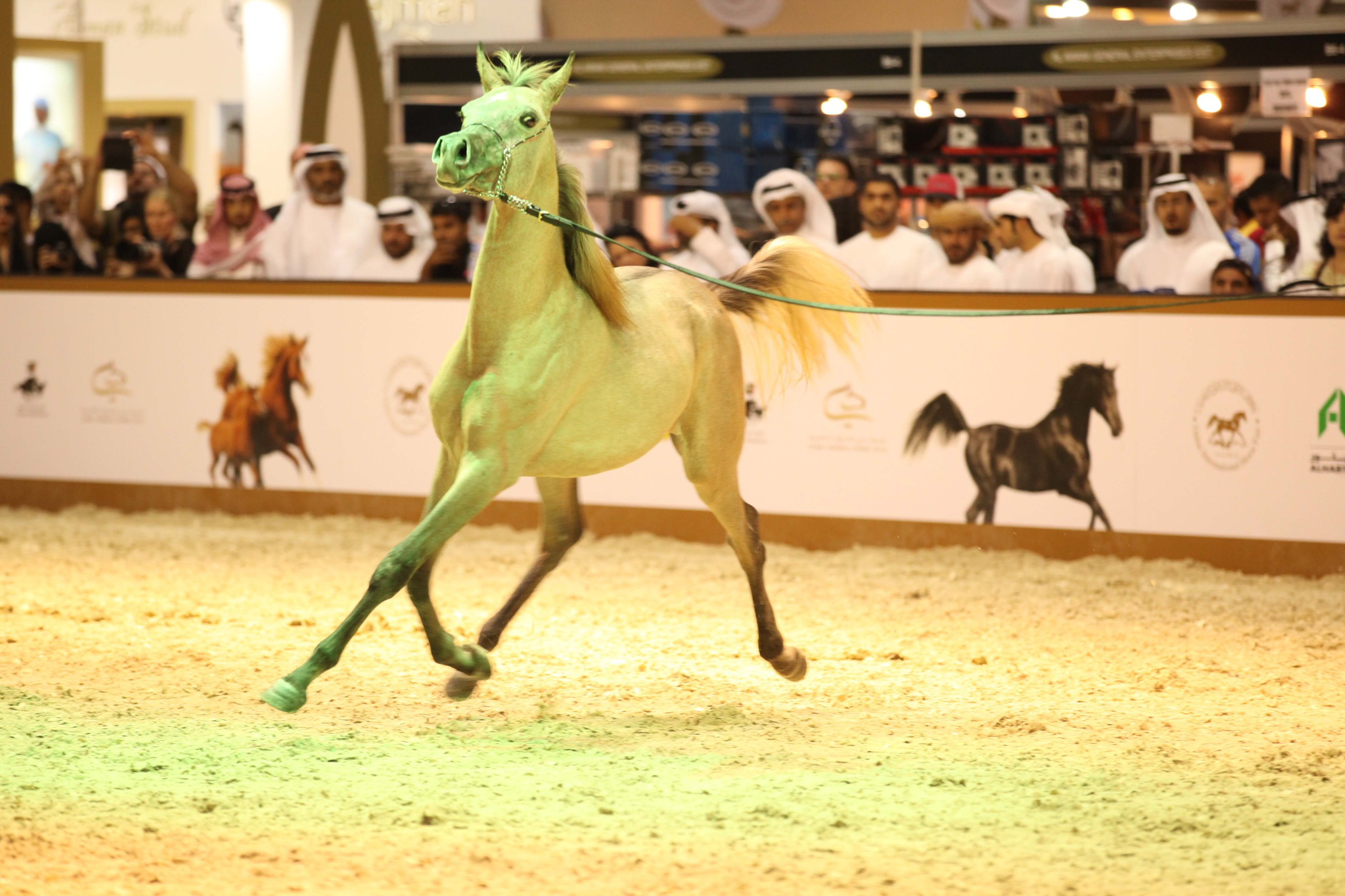 Horse Times Egypt: Equestrian Magazine :News :EQUESTRIAN FANS RARING TO GO DUBAI INTERNATIONAL ARABIAN HORSE CHAMPIONSHIP AND FAIR OPEN TOMORROW