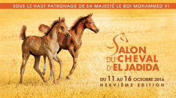 Horse Times Egypt: Equestrian Magazine :News :SALON DU CHEVAL D'EL JADIDA 2016 - ALL RESULTS
