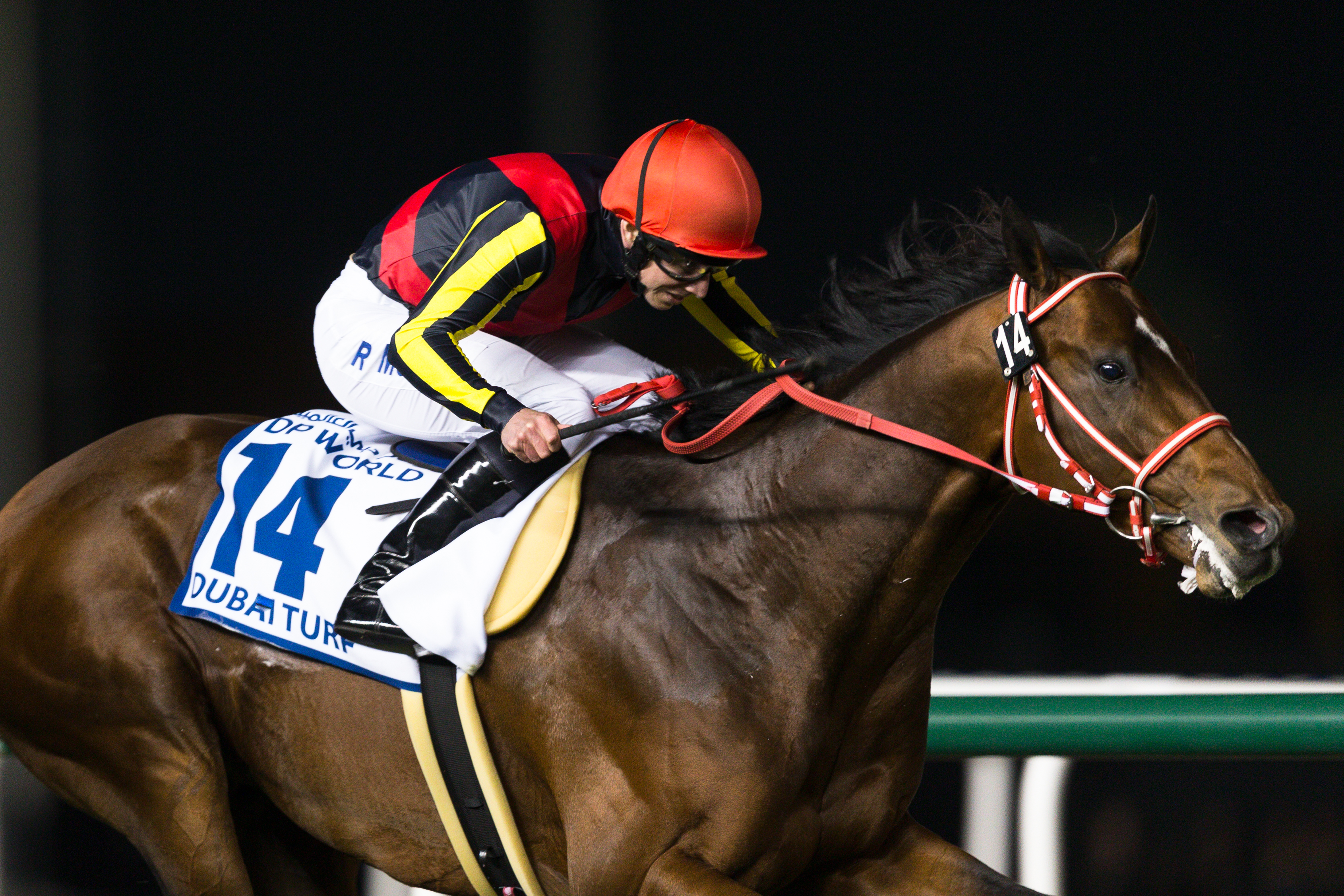 Horse Times Egypt: Equestrian Magazine :News :TRACKWORK NOTES :  GROUP ONE 6M$ DUBAI TURF BY DP WORLD - 1800M