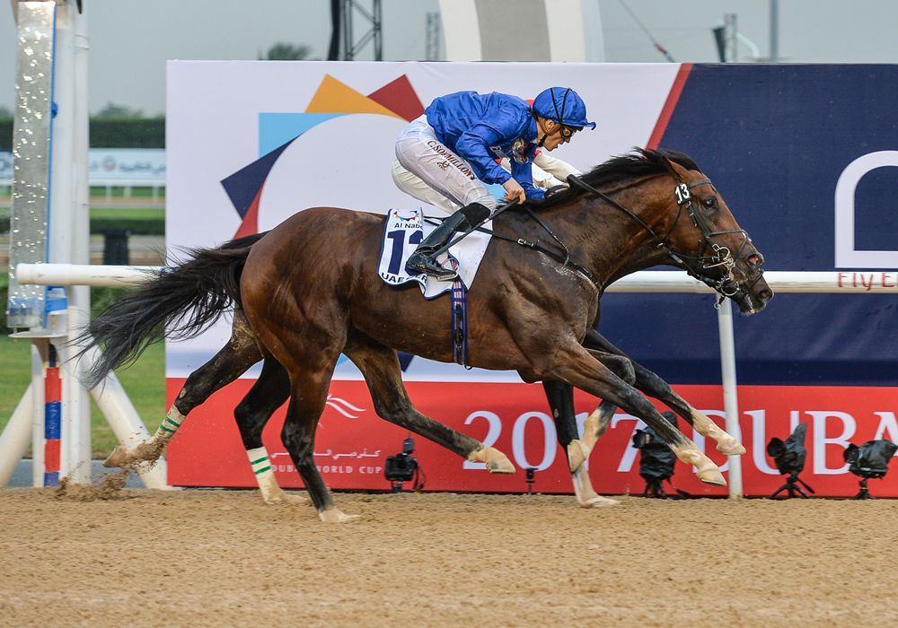 Horse Times Egypt: Equestrian Magazine :News :GODOLPHIN'S THUNDER SNOW WILL RUN IN THE KENTUCKY DERBY
