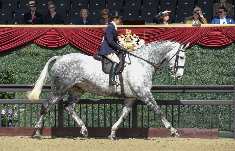 Horse Times Egypt: Equestrian Magazine :News :SUN SHINES FOR OPENING DAY OF ROYAL WINDSOR HORSE SHOW