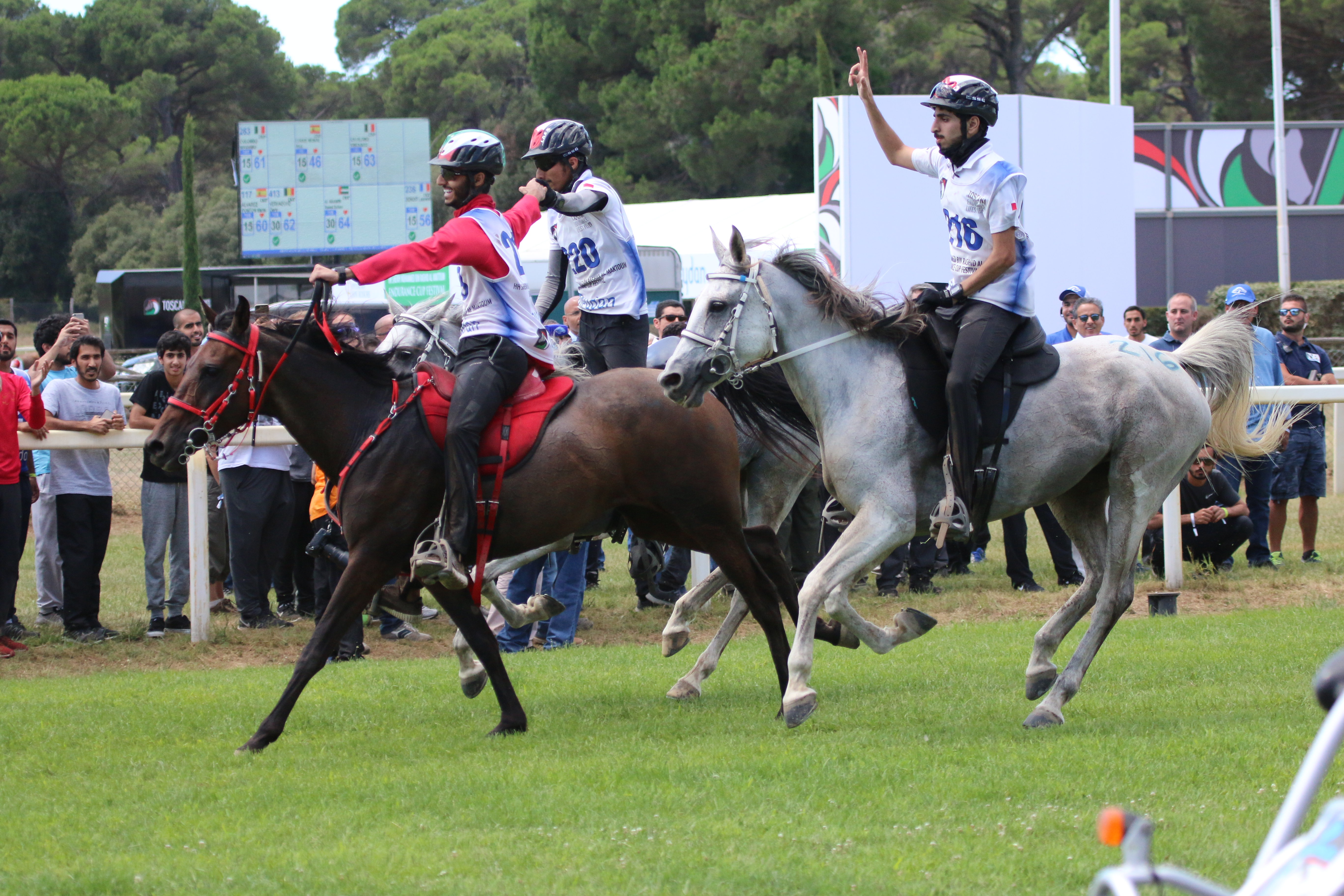 Horse Times Egypt: Equestrian Magazine :News :UAE Riders Celebrate Successful Outing at Toscana Endurance Lifestyle