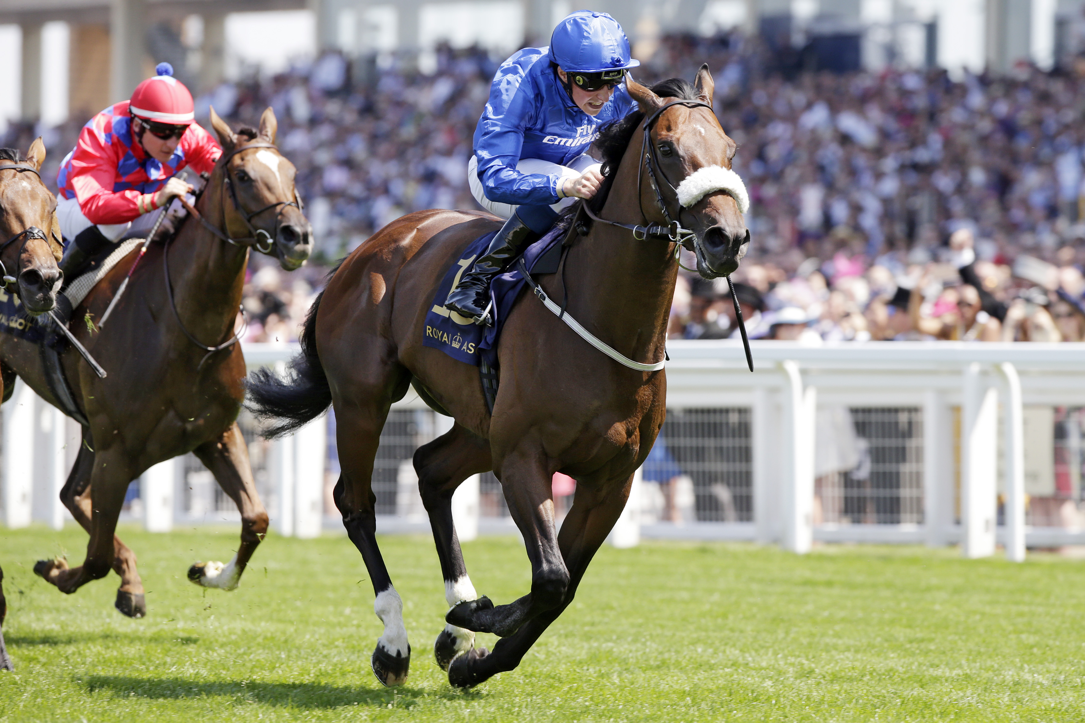 Horse Times Egypt: Equestrian Magazine :News :Glorious Goodwood preview - Day two (Wednesday 2nd August): Ribchester goes for more G1 glory in Sussex Stakes