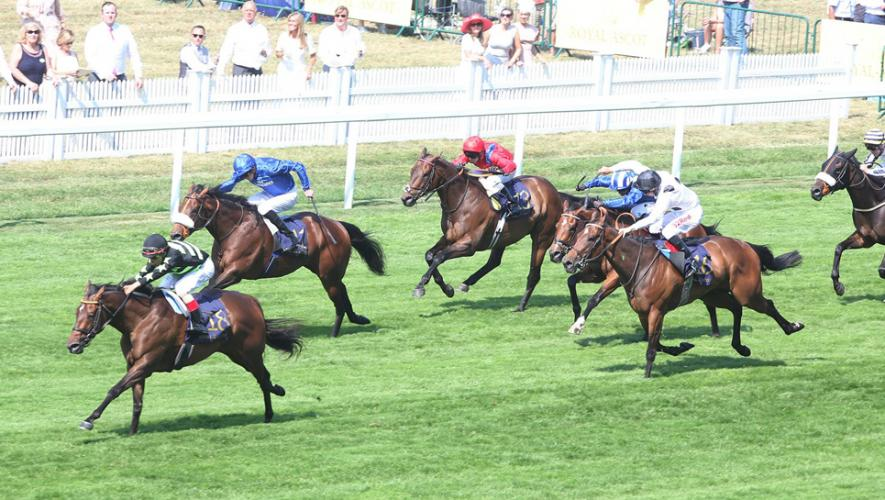 Horse Times Egypt: Equestrian Magazine :News :Profitable heads Godolphin Challenge on Day three of York's Ebor Festival