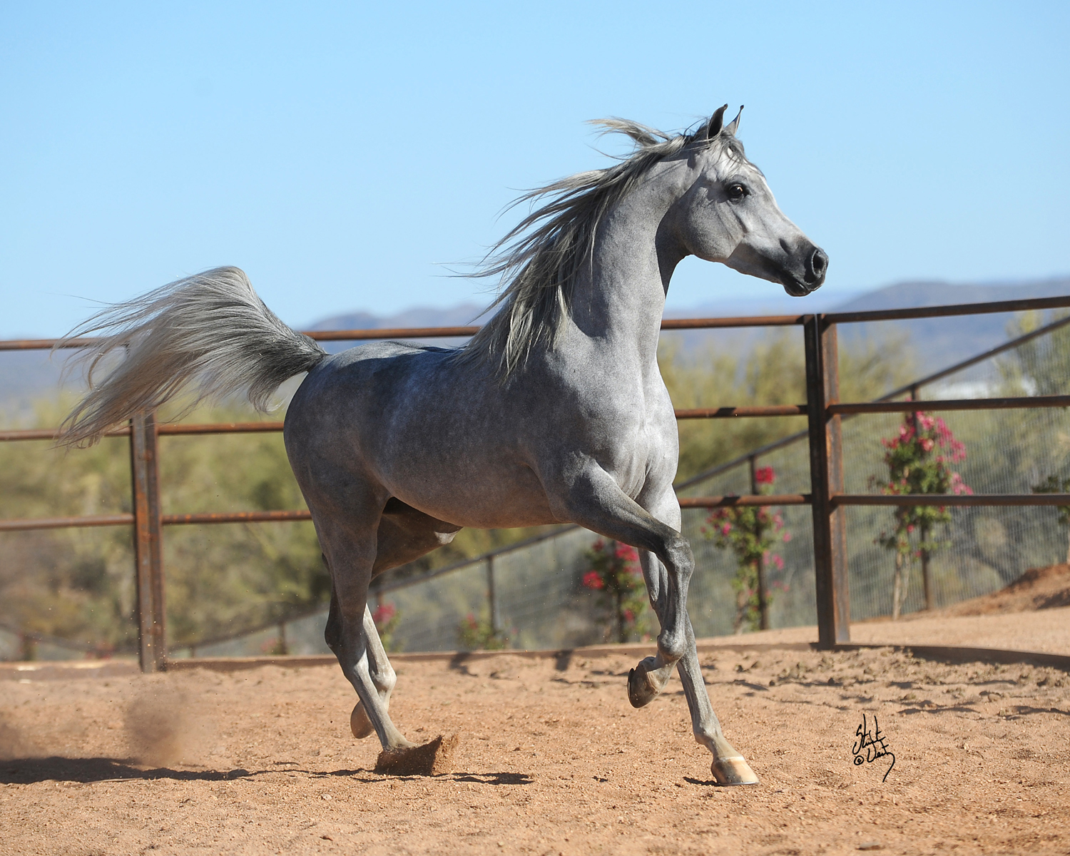 Horse Times Egypt: Equestrian Magazine :News :NEW YEARS WEEKEND ARABIAN FARM TOUR HELPS RESCUE GROUP